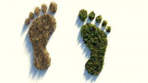 Carbon footprint: impronta di carbonio